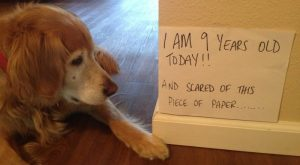 The True About Dogs, Dog Shaming FUNNY!