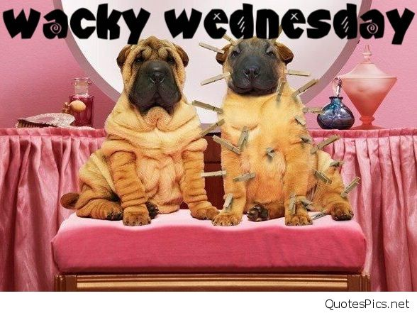 Have a nice Wednesday – Fit for Fun