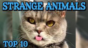 Top 10 Strange Pets and Animals || LPE360