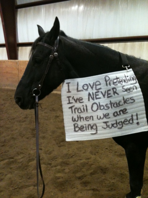Funny Horse Shaming