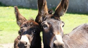 Cute Donkeys