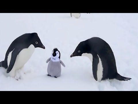 The FUNNIEST WINTER ANIMALS – You'll definitely FAIL this TRY NOT TO LAUGH challenge!