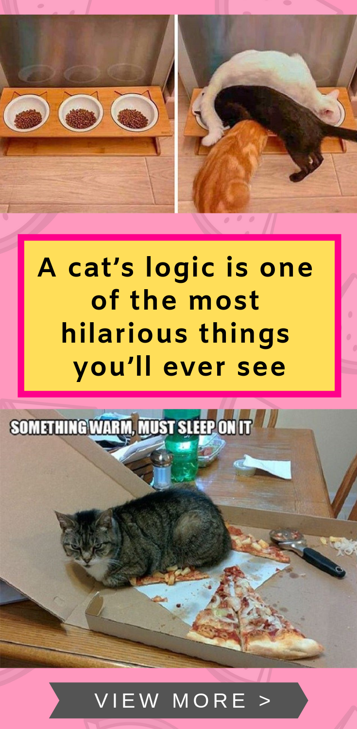 32e30de41e89 A cats logic is one of the most hilarious things youll ever see funny png  735x1500
