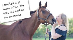 "Funny Horse Shaming #horse explore Pinterest""> #horse #shaming explore Pinterest""> #shaming #funny explore Pinterest"">…"