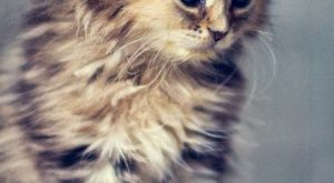 "Unusual #Cat explore Pinterest""> #Cat Breeds or different kinds of #cats explore Pinterest""> #cats.…"