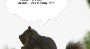 Caption Squirrel: Those Were the droids I was looking for!