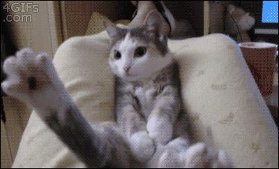 Animated GIF cat