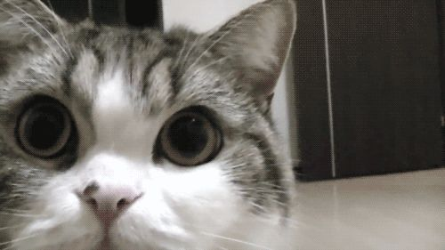 Funny Animated Cat GIF 01