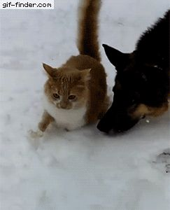 Funny Animated Cat GIF 05