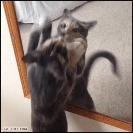 Funny Animated Cat GIF 07