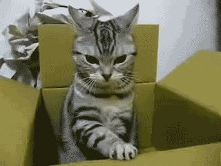 Funny Animated Cat GIF 17