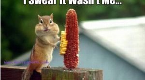 Funny Squirrel Quotes 030