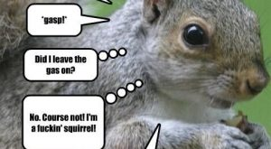 Funny Squirrel Quotes 033