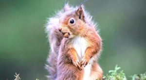 Funny Squirrel Quotes 063
