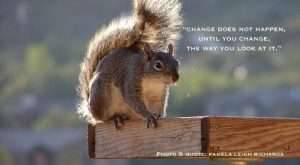 Funny Squirrel Quotes 087