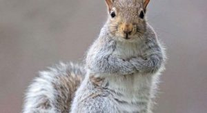 Funny Squirrel Quotes 088