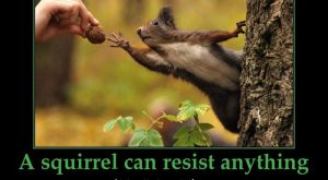 Funny Squirrel Quotes 089