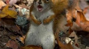 Funny Squirrel Quotes 117