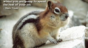 Funny Squirrel Quotes 120