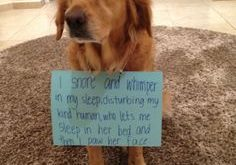 funny horse shaming 0001