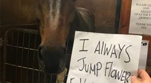 funny horse shaming 0024