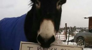 funny horse shaming 0068
