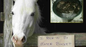 funny horse shaming 0130 1