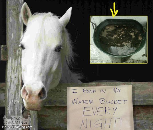 funny horse shaming 0130