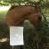 funny horse shaming 0142