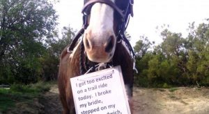 funny horse shaming 0144