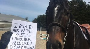 funny horse shaming 0150