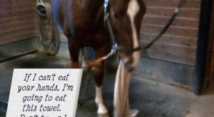 funny horse shaming 0151