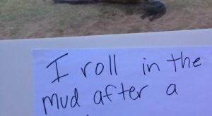 funny horse shaming 0152