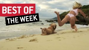 Best of the Week | Woof Watch