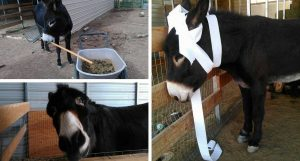 Donkey Shaming 101: The Many Faces of Charlie the Donkey