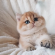 What an adorable kitten! Makes me rethink my vow never to have another pet as long as I live