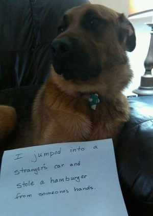 This hamburger thief dog