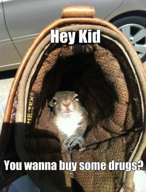 Cool funny squirrel memes