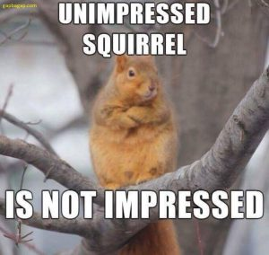 Funny Sqirrel Quote 007