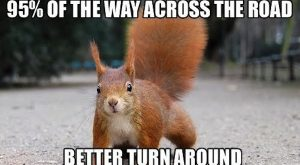 Funny Sqirrel Quote 046
