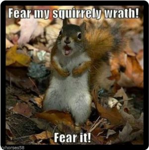Funny Sqirrel Quote 151