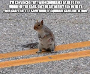 Funny Sqirrel Quote 171