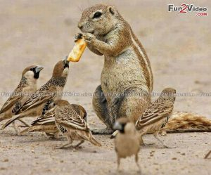 Funny Squirrel Sparrow
