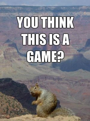 Remarkable funny squirrel memes