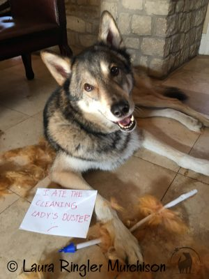 The bad Dog Collection – Dog Shaming