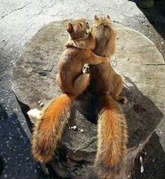 22 Squirrels That Are So Animated You Would Think They Were Human I Can Has Cheezburger2