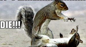 Animal Humor images squirrel funny HD wallpaper and background photos1