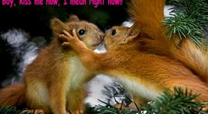 Boy Kiss Me Now I Mean Right Now Funny Squirrel Couple