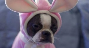 Cute and Pet Animals_ funny dog halloween costume