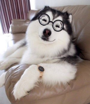 Cute dogs part 225 cute dog picture funny dog photo